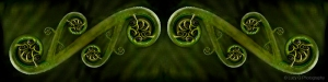 koru fern maori nature photos lucy g-11